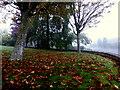 H4672 : Fallen leaves, Knockgreenan Avenue, Omagh by Kenneth  Allen