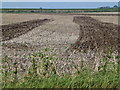 TL4074 : Partially cultivated stubble field near The Hermitage, Earith by Richard Humphrey