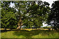 TL8060 : Ickworth Park: near Downter's Wood by Christopher Hilton