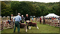 SD1599 : Eskdale Show 2015 by Peter Trimming