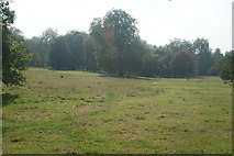 TQ2780 : View of grass and trees in Hyde Park from the path next to N Carriage Drive by Robert Lamb