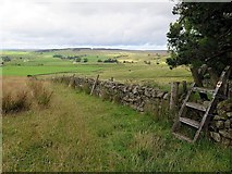 NY6565 : Pennine Way at Haltwhistle Golf Course by Andrew Curtis