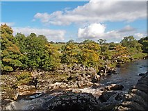 SE0063 : Linton Falls, River Wharfe, near Grassington by Julian Osley