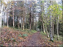 NT4227 : Path, Bowhill woods by Richard Webb