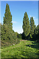 TQ0967 : Three Poplars, Shepperton by Alan Hunt