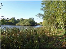 SE2812 : Bretton Park's Lower Lake by Steve  Fareham