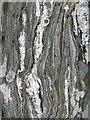 L6741 : Mylonite outcrop by Jonathan Wilkins