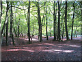 SP9308 : Looking across the main brick pit area from the path through Roundhill Wood by Chris Reynolds