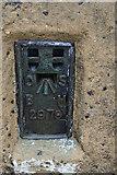 NY6834 : Trig Point OS BM 2979, Cross Fell Summit by Ian S