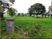 H5472 : Grass paddock, Bracky by Kenneth  Allen