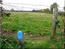 H5472 : Water meter marker, Bracky by Kenneth  Allen
