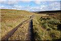 NY7533 : Helm Wind Walk on Moor House, Moor by Ian S
