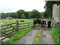 NY9172 : Farmland by Haughton Castle by David Purchase