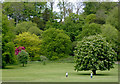 SO8891 : Colours of Spring in Himley Park, Staffordshire by Roger  Kidd