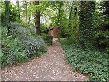 TQ2589 : Path in Little Wood by Marathon