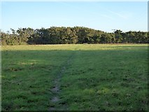 SW6719 : Footpath across the fields from Angrouse to Mullion by David Smith
