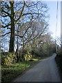 SX2577 : Lane past Stonaford Stones Plantation by Derek Harper
