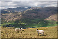 NY3509 : Towards Grasmere Village by Ian Capper