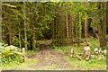 NZ0256 : Forest road entering Dowdon Plantation by Trevor Littlewood