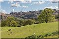 NY3606 : Towards Loughrigg Fell by Ian Capper
