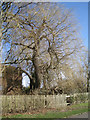 SP2965 : Weeping willow in the process of collapse, rear of William Tarver Close, Warwick by Robin Stott