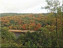 SK1786 : Autumn colours by Steve  Fareham