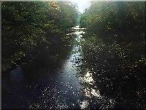 SK1984 : Autumn sunshine on the River Derwent by Steve  Fareham