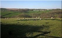 SS6917 : Sheep above Catham Lake by Derek Harper