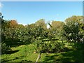 SP4809 : Wolvercote Community Orchard by Alan Murray-Rust