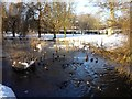 SE6250 : Ducks near Langwith by DS Pugh