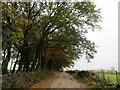 SD7214 : Lane to Holt's Fold by Philip Platt