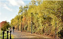 J3473 : Autumn colour by the River Lagan, Belfast (October 2015) by Albert Bridge