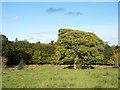 NZ1255 : Tree in field near Derwent Walk by Trevor Littlewood