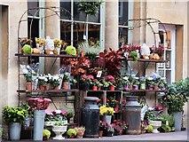 ST7564 : Florist's display by Patrick Mackie