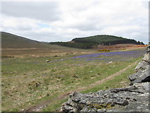 J3431 : Bluebells on a dry bank between the wall of Tollymore Park and the Tullybranigan Bog by Eric Jones