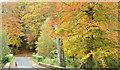 J3268 : Autumn, Minnowburn, Belfast - October 2015(1) by Albert Bridge