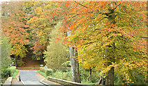 J3268 : Autumn, Minnowburn, Belfast - October 2015(1) by Albert Bridge