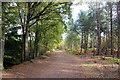 SJ5570 : Delamere Forest by Jeff Buck