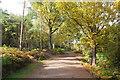 SJ5570 : Delamere Forest Park by Jeff Buck