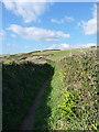 SW6226 : Coastal path above Parc Trammel Cove by Richard Law