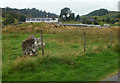NM9228 : Standing Stone and Glenamachrie farm by Peter Bond