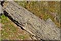 NY0012 : Clints Quarry - Limestones by Ashley Dace