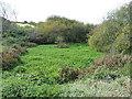 SW5828 : Pond at Trevurvas by Richard Law
