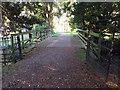 NO3848 : Footbridge over the Glamis Burn by Stanley Howe