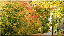 J3875 : Autumn trees, Cairnburn Road, Belfast (October 2015) by Albert Bridge