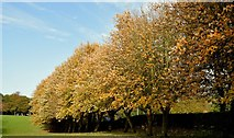 J3875 : Autumn trees, Belmont Park, Belfast (October 2015) by Albert Bridge