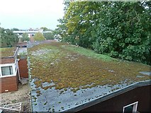 ST8558 : Green roof on Polebarn Road, Trowbridge by Penny Mayes