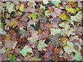 SO8554 : A carpet of autumn leaves by Philip Halling