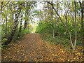SE2235 : Path through a copse, Coal Hill by Stephen Craven