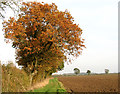 TM2690 : Autumnal trees beside footpath by Evelyn Simak